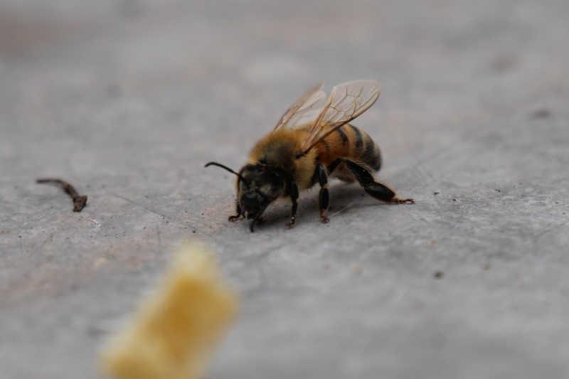 Sustainable Urban Beekeeping