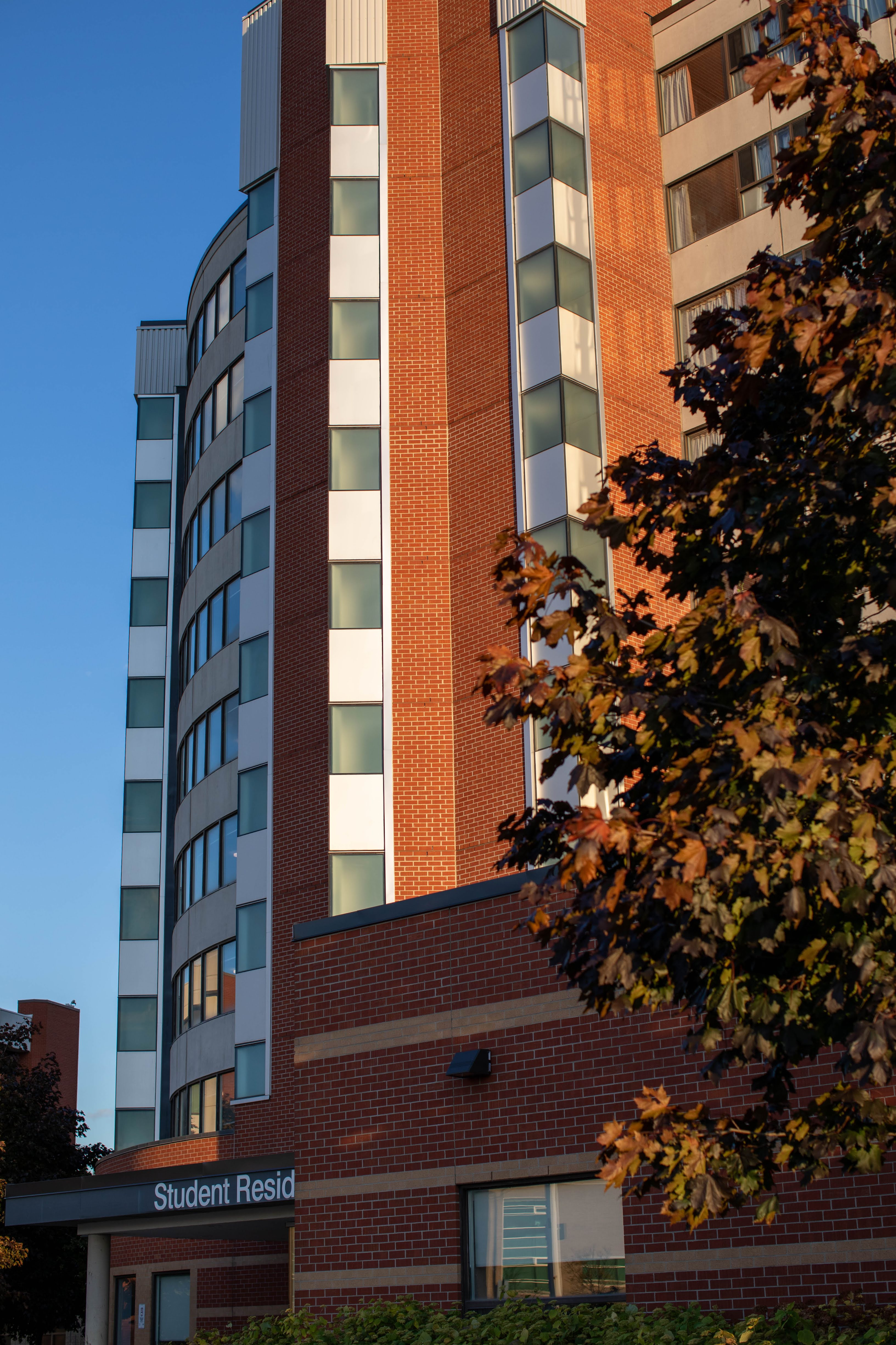 A tall Humber College residence building is seen from behind autumn leaves.