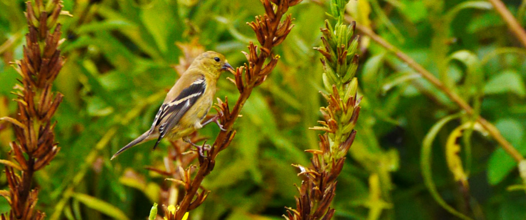 Pesticide treatment to protect native plants and animals