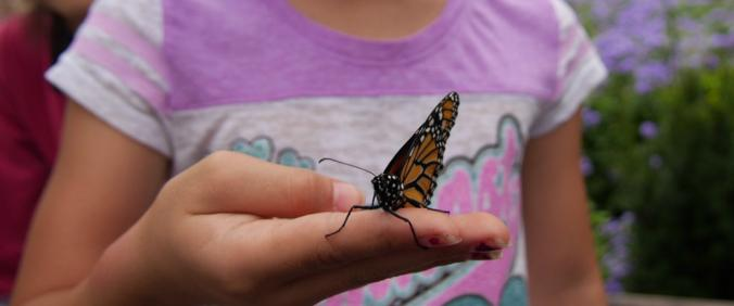 A girl holds a monarch butterfly