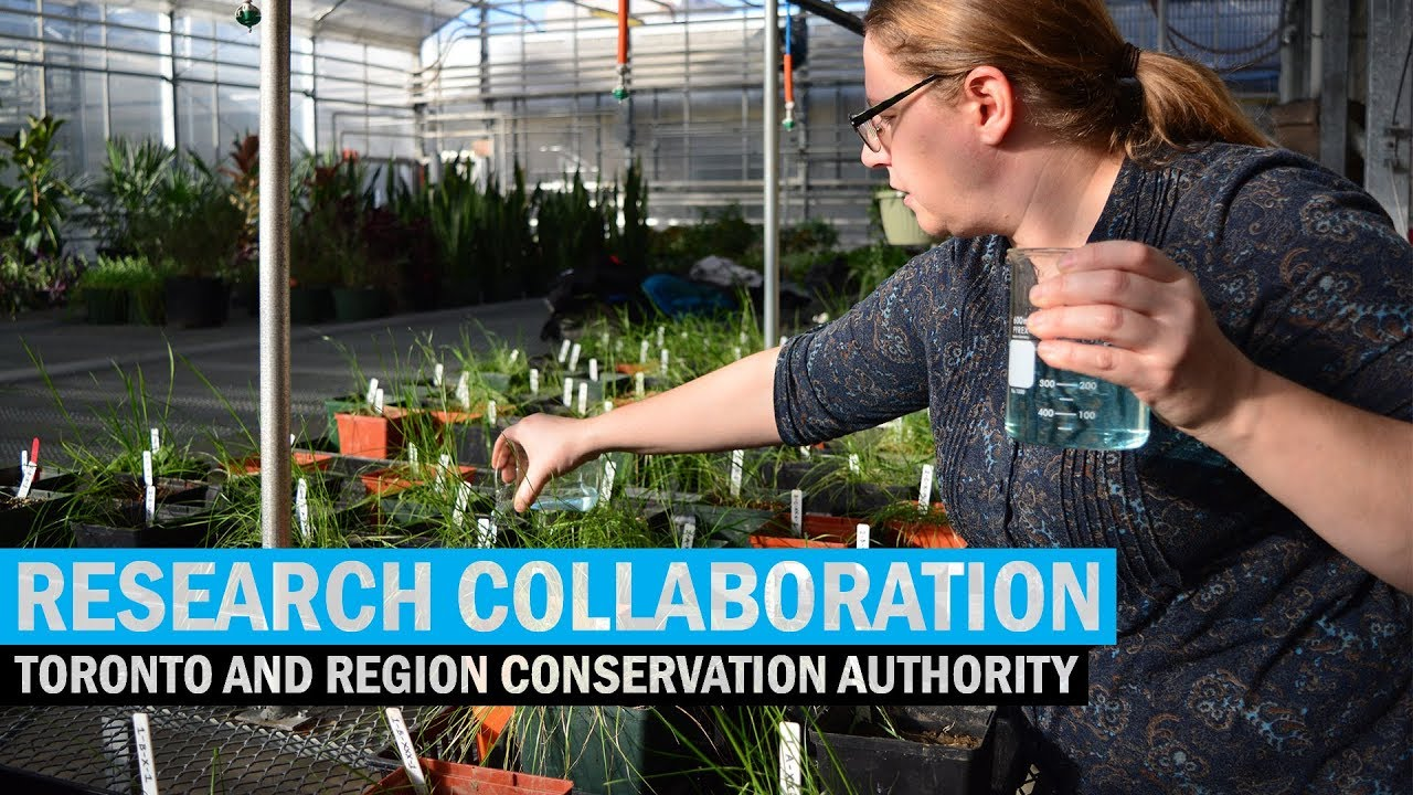 Research Collaboration – Humber and the TRCA