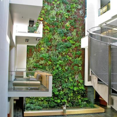 Plant wall at the University of Guelph-Humber