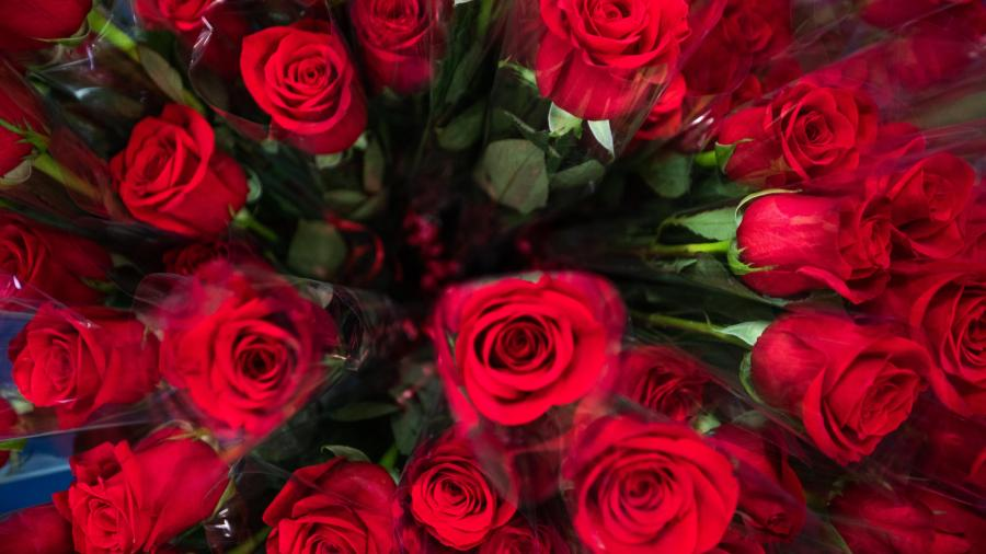 Roses to mark the National Day of Remembrance