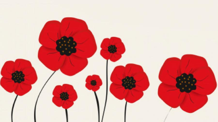 Red poppies on a cream background