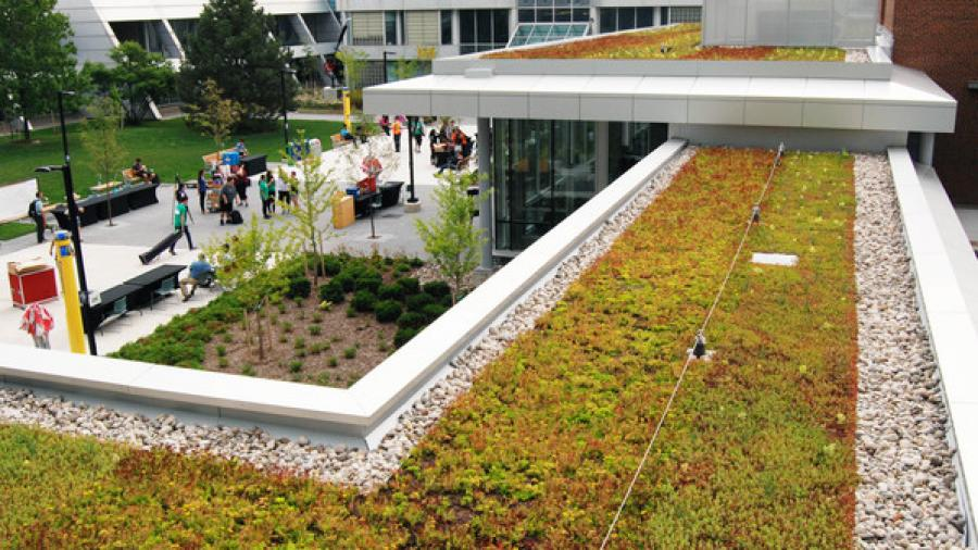Green roof at Humber North