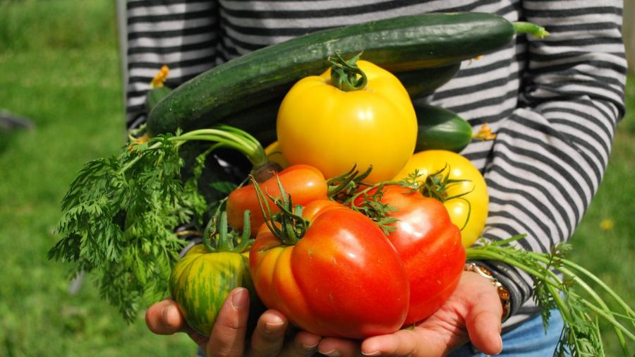 Improving access to Good Food on campus