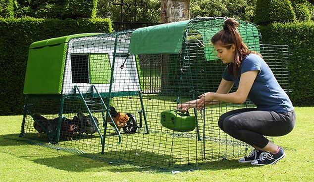 A woman tends to chickens inside a plastic backyard coop